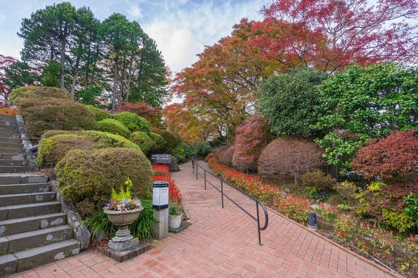 Tak jauh dari Tokyo, Hakone adalah destinasi populer di pegunungan Taman Nasional Fuji-Hakone-Izu. Cobalah main ke Hakone untuk menikmati suasana Jepang yang berbeda. (iStock)