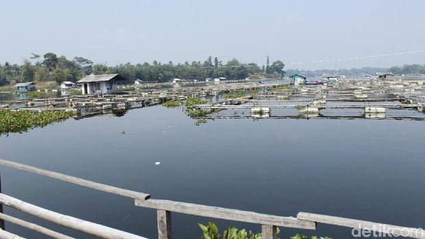 Air Mulai Surut, Peternak Ikan Waduk Saguling Khawatir Ikan Mabuk