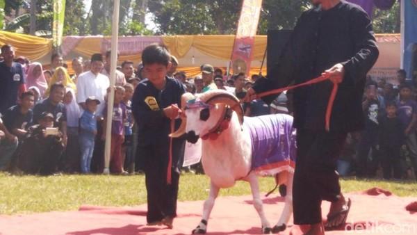 Kali ini digelar di Lapang Wirabaya Kecamatan Rajadesa. Yang mencuri perhatian ini adanya Sheep show yang ditunggu-tunggu dan menjadi perhatian warga. (Dadang Hermansyah/detikcom)