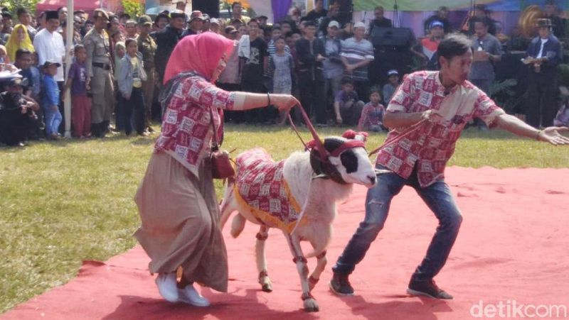 Seperti inilah kemeriahan Festival Ternak atau Pesta Patok di Kabupaten Ciamis kembali digelar. (Dadang Hermansyah/detikcom)