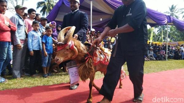 Festival ternak ini digelar oleh Dinas Peternakan dan Perikanan Kabupaten Ciamis. Harapan kedepan festival ternak atau pesta patok ini menjadi salah satu daya tarik wisatawan. (Dadang Hermansyah/detikcom)