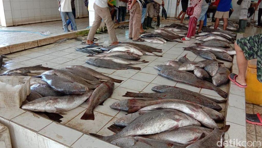 Musim Ikan, Sekali Melaut Nelayan di Pangandaran Bisa Kantongi Rp 35 Juta