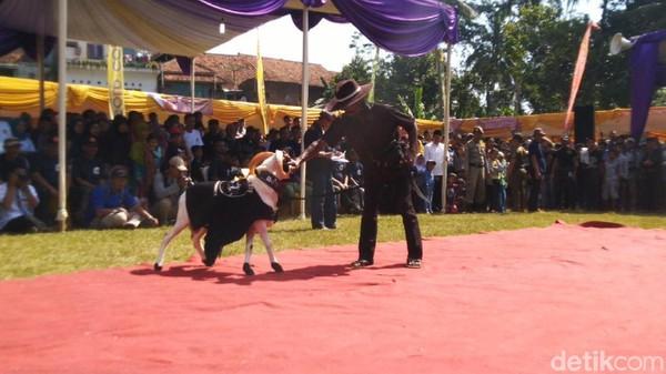 Juga kontes domba ini juga sebagai salah satu upaya untuk mengevaluasi, sejauh mana kemampuan dan keterampilan dalam mengurus ternaknya. (Dadang Hermansyah/detikcom)