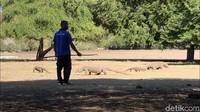 TN Komodo akan Buka untuk Wisnus & Ekspat 15 Agustus