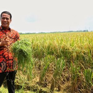 Plus Minus Pertanian RI 5 Tahun Jokowi Jadi Presiden