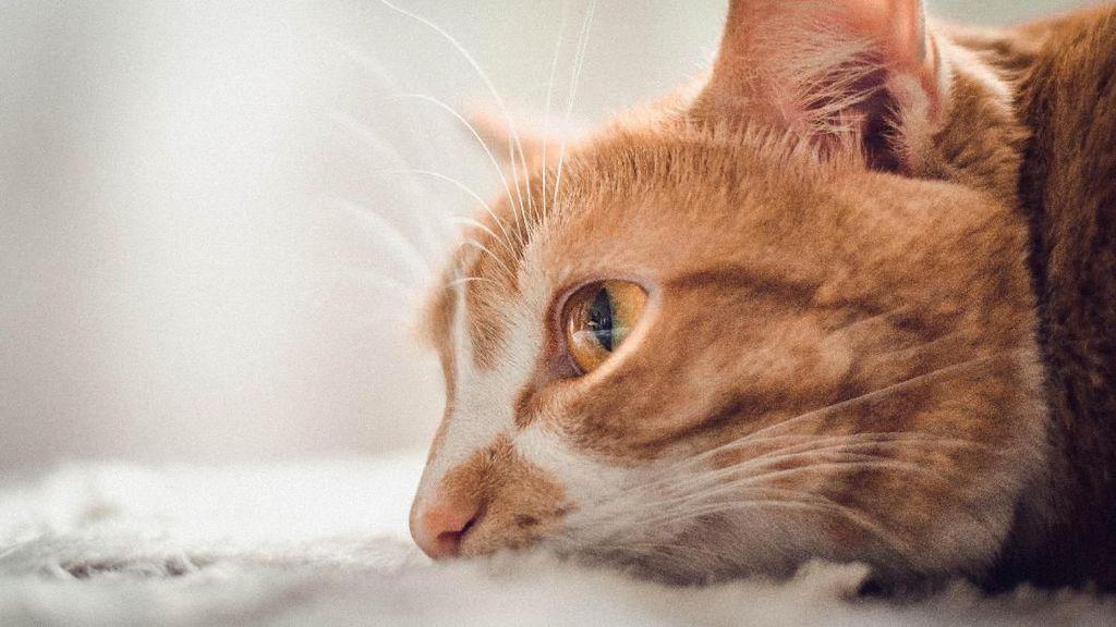 Saat Artis Juga Shock dengan Tragedi Kucing Hidup Dimakan Abah Grandong