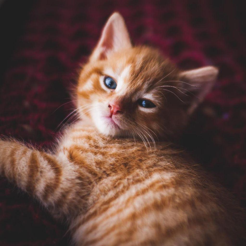 Ilmuwan Amerika Sebut Kucing Bisa Deteksi Dini Gempa