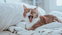 Tak Hanya Manusia, Kucing Juga Harus Dikarantina