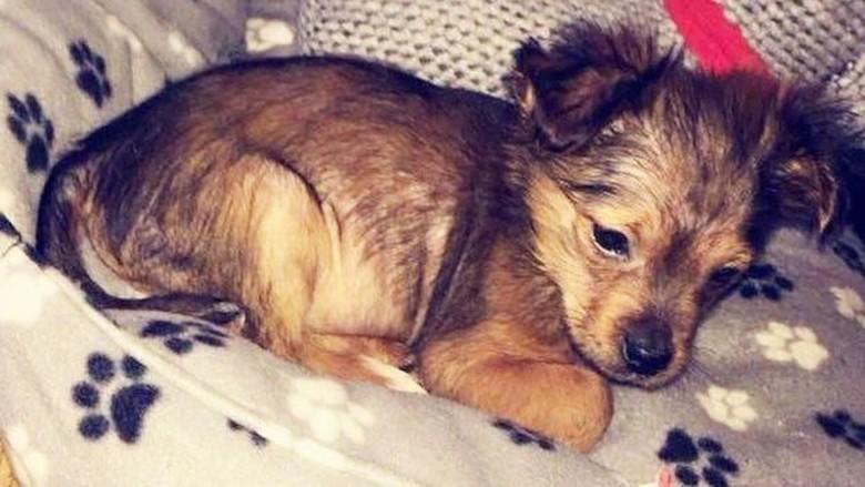Pria di Irlandia Dipenjara karena Pukul Anak Anjing Hingga Mati