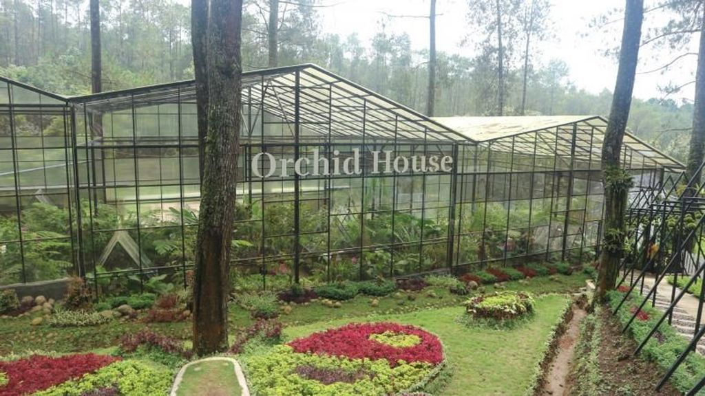 Pecinta Anggrek Wajib Datang ke Sini: Orchid Forest Lembang