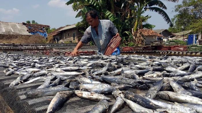 Ikan asin mengandung banyak yodium (Foto: Syahdan Alamsyah)