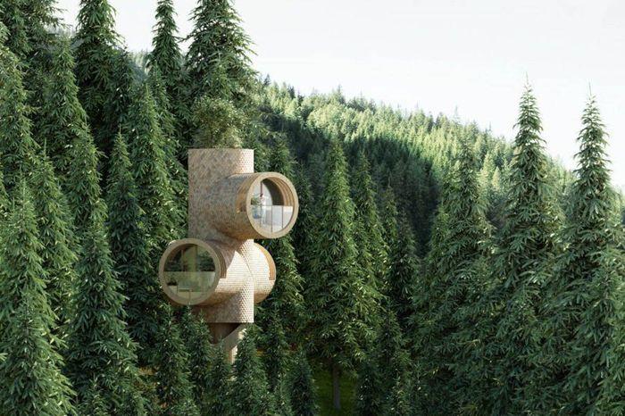 Diberi nama Bert, rumah pohon ini mulai dipasarkan 2020. Percht/Inhabitat.