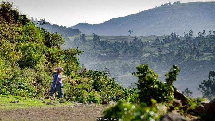 Hutan keramat di Ethiopia (BBC)