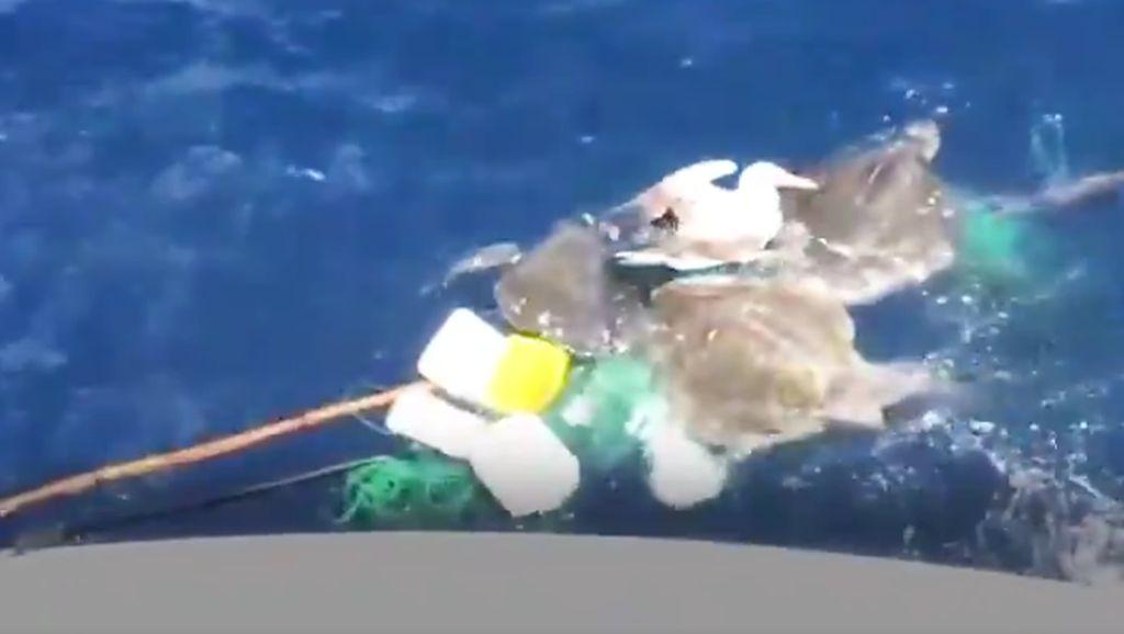 Mengharukan, Nelayan Selamatkan Penyu dan Burung yang Hampir Mati