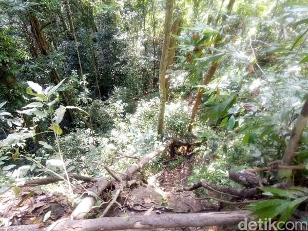 Untuk menuruni Jurang Lebah ini, para pengunjung menggunakan akar pohon dan batang potong yang dipasang secara sederhana. Cukup berbahaya melewatinya (Faruk Nickyrawi/detikcom)