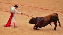 Aksi Matador Bertarung Melawan Banteng di Festival San Fermin
