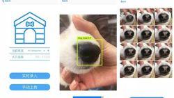 Aplikasi Ini Bisa Cari Anjing Hilang Pakai Hidung