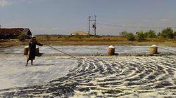 2.600 Ha Lahan di NTT Dikembangkan Jadi Tambak Garam