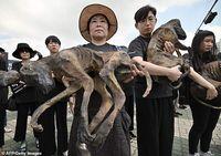 Didemo Pencinta Hewan, Peternak Anjing Ini Malah Sengaja Makan Daging Anjing