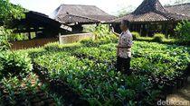 Tur ke Kebun Kopi Magelang Ini Suguhannya Bukan Minum Tapi Makan Biji