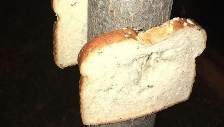 Roti di pohon (dok reddit)