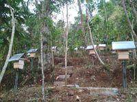 Sarang-sarang lebah lanceng di Kabupaten Magelang (Gubug Lanceng/Facebook)