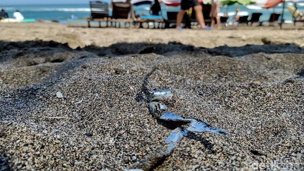 Ikan Mengambang di Pantai Batu Bolong Dikaitkan Gempa Bali, Ini Faktanya