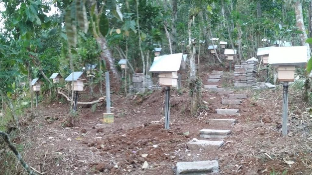 Foto: Dapat Cuan dari Lebah Hama di Magelang
