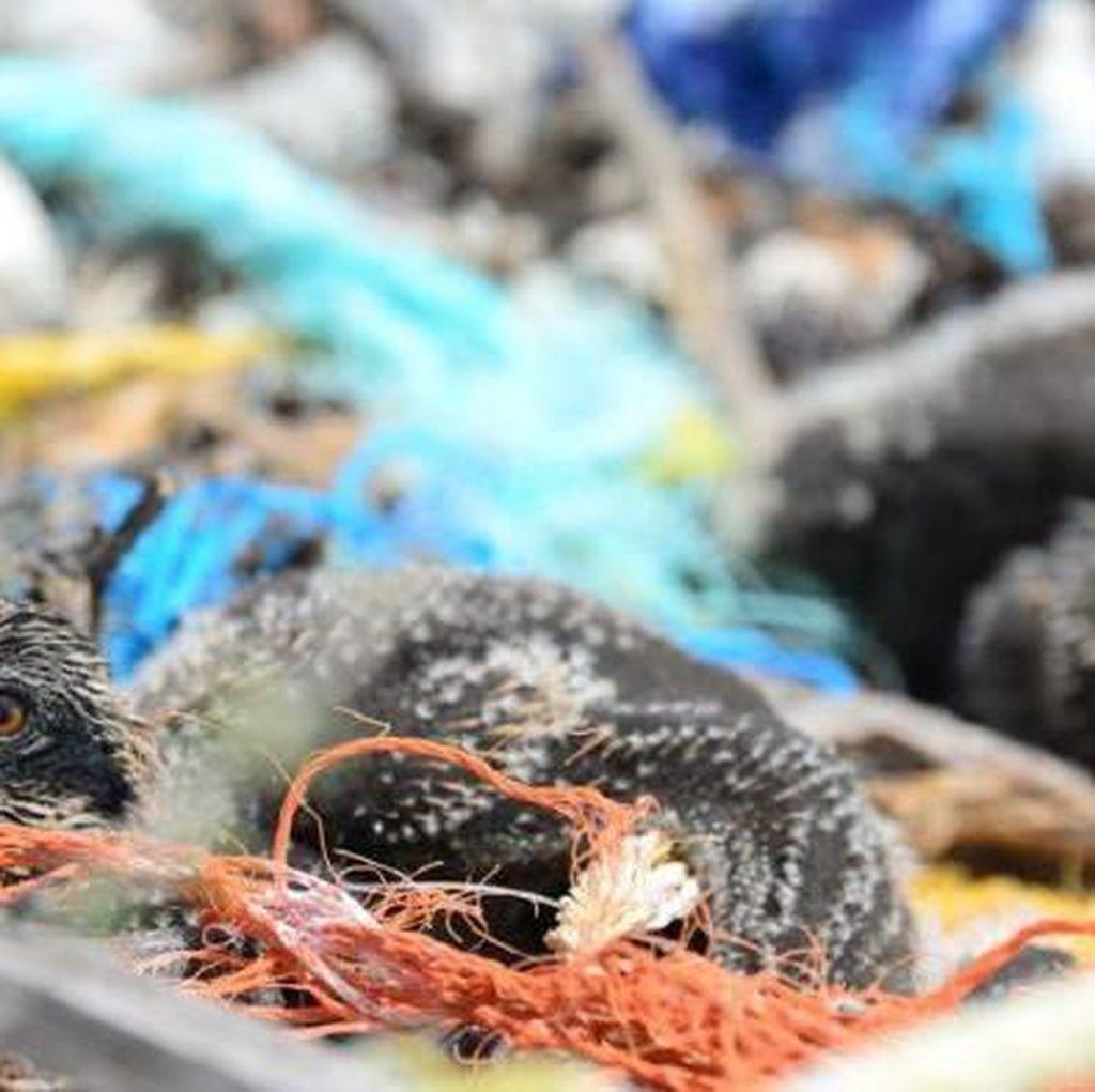 Burung Bikin Sarang dari Limbah Plastik dan Muntahkan Plastik, Kaca dan Logam