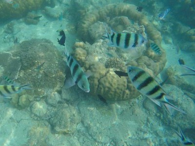 Begini Lho Indahnya Bawah Laut Pulau Tidung