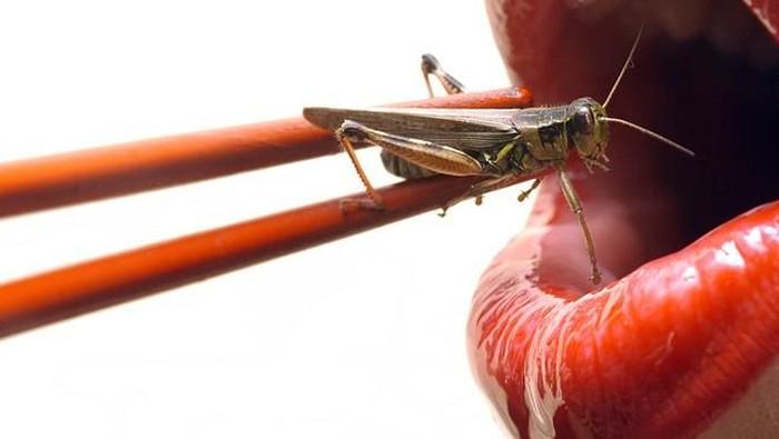 Salah satu ilmuwan menyarankan untuk mengganti protein hewani dengan serangga. Foto ilustrasi: iStock