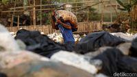 Bisnis Sampah, Loyo di Lokal Tapi Diapresiasi di Luar Negeri