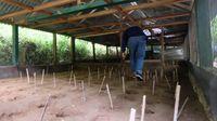 Melestarikan burung Maleo di Bone Bolango