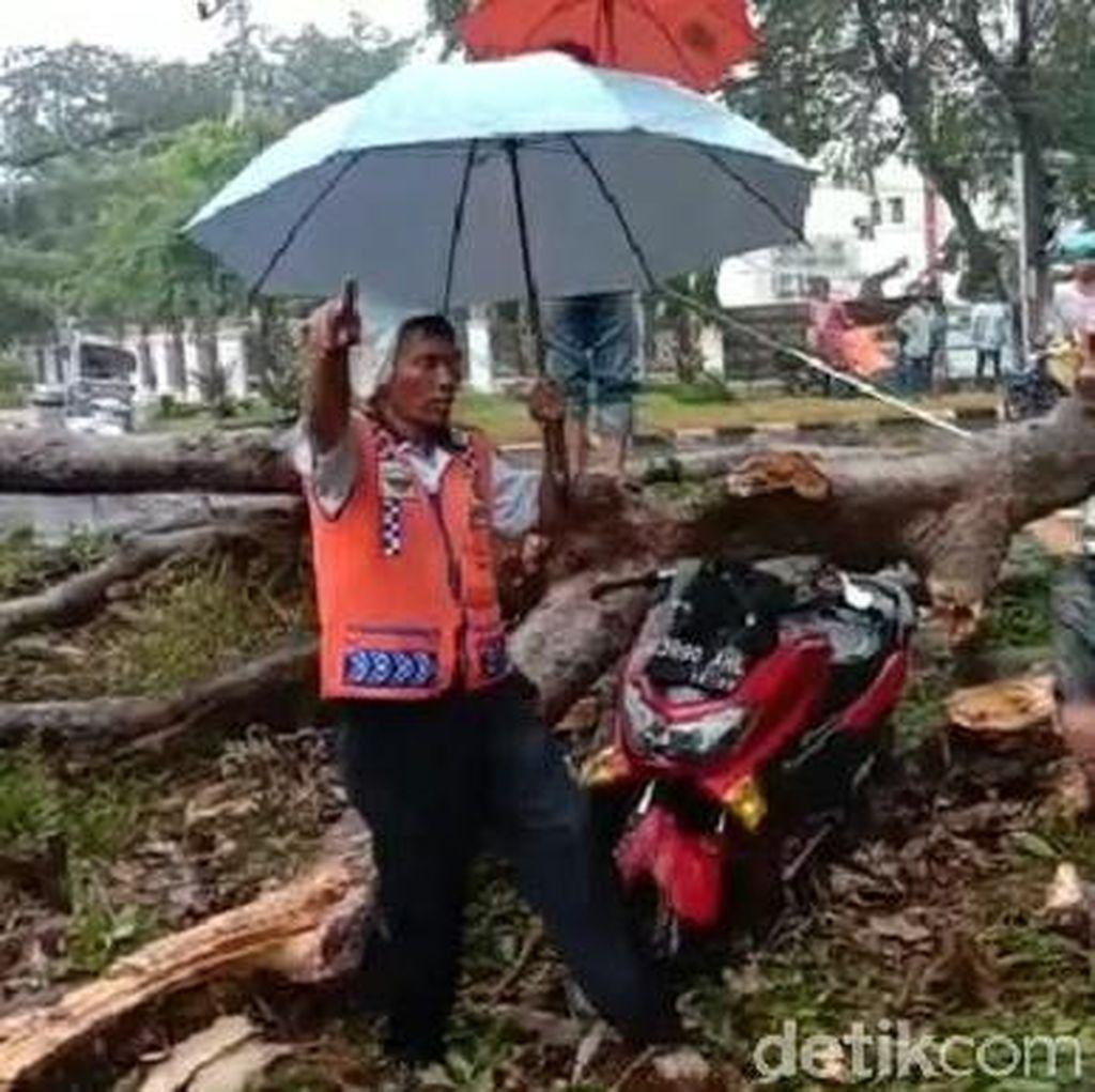 Pohon Tumbang Timpa Pemotor di Medan