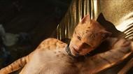 Taylor Swift Berubah Jadi Kucing di Film Cats