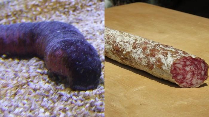 Sea cucumbers atau teripang punya bentuk yang mirip seperti salami. Yaitu hidangan khas Italia, yang terbuat dari daging sapi atau babi dengan bentuk mirip seperti sosis. Foto: Vice/Istimewa
