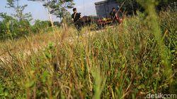Pasca-Bentrok di Mesuji, Perbatasan Lampung-Sumsel Kondusif