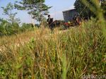 Pascabentrok di Mesuji, Perbatasan Lampung-Sumsel Kondusif