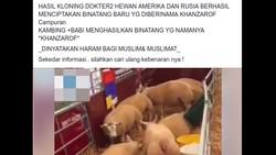 Viral Ada Hewan Hasil Klon Kambing dan Babi, Ini Faktanya