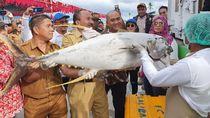 Upaya Kemenhub Optimalkan Tol Laut di Maluku dan Maluku Utara