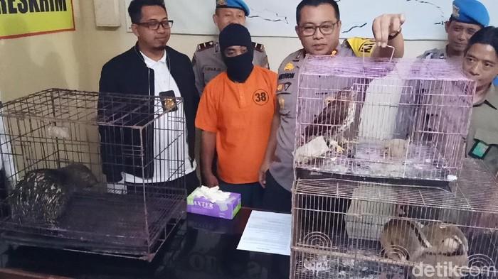 Hewan langka yang diperdagangkan (Foto: Andhika Dwi Saputra)