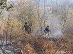 8 Hektar Hutan di Bukit Bentar Probolinggo Terbakar