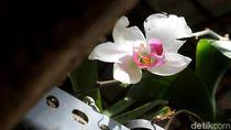 Foto: Mamasa Orchid, Taman Anggrek Cantik di Sulawesi Barat