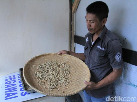 Melihat Budidaya Kopi Ala Narapidana di Lapas Narkotika Jelekong