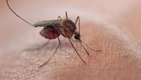 Kenapa Kamu Diincar Nyamuk? Ada Alasan Ilmiahnya
