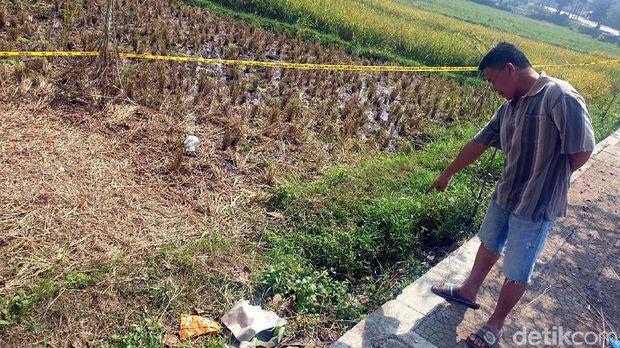 Cerita Warga yang Inisiatif Tutupi Jasad Amelia di Tepi Sawah
