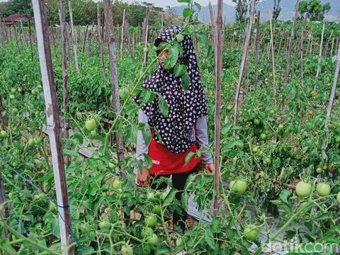 Warga Wonogiri Kembangkan Solusi Pertanian untuk Daerah Kurang Air