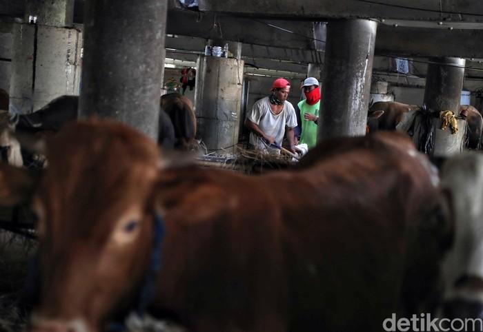 Jelang Hari Raya Idul Adha sejumlah pedagang mulai menjual hewan kurban. Geliat perdagangan itu dapat dilihat di kolong Tol Wiyoto Wiyono, Jakarta Utara.
