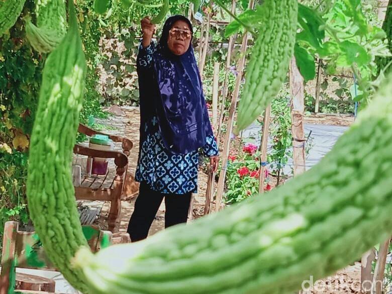 Warga Wonogiri Kembangkan Pertanian Hemat Air dan Anti Harga Jatuh