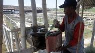 Unik! di Grobogan Ada Sumur Penghasil Garam, Ada Sejak Zaman Belanda